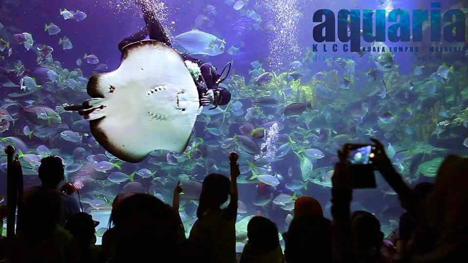 aquaria klcc diver with a stingray