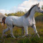 Island Horses Langkawi