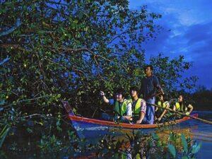 kampung kuantan kuala selangor fireflies tour