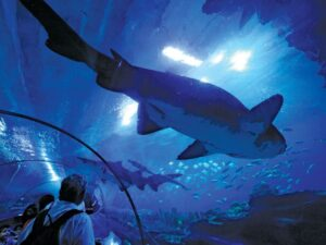 aquaria klcc kuala lumpur ticket price discount