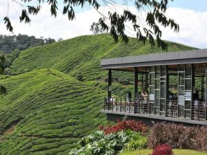 kuala lumpur to cameron day tour - the boh tea plantation viewing deck