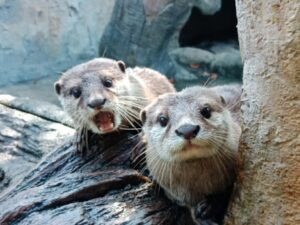 farm in the city's otters - you can see them with a discount ticket from jomjalan