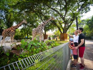 foreign tourists at giraffe enclosure - with possible discounted zoo negara ticket price