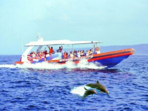 a cruise that you should join in bali is the bali dolphin tour
