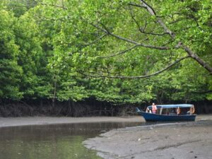 with the kubang badak mangrove cruise you'll go on a boating trip into the langkawi island mangrove
