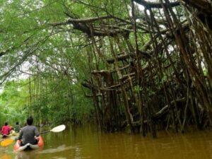 langkawi kubang badak kayaking tour