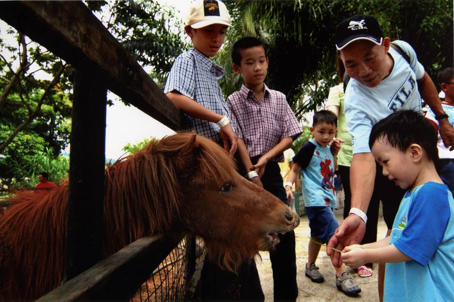 the a famosa safari tickets let you access the petting zoo with ponies, rabbits and more