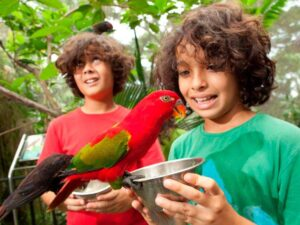 you can feed the birds with your bali bird park tickets