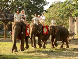 bali safari rhino addon lets you ride elephant in the bali safari