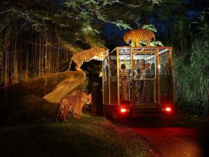 surrounded by tiger in the bali safari and marine park