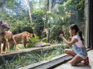you can get as close to the tigers and other wildlives in the bali zoo indonesia