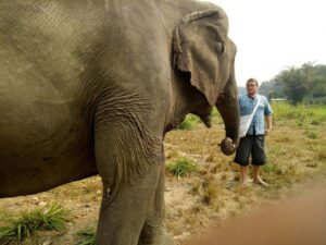 with the elephant care mountain sanctuary you can get up close to the giant in chiang mai