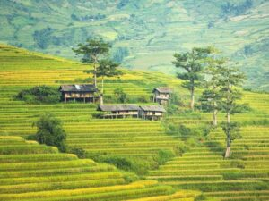 the jatiluwih rice terrace in bali is one of the highlight in this bali tour