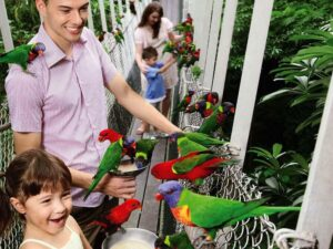 with your jurong bird park ticket you may feed lories and more in this singapore bird park