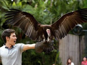 eagles are one of the highlights of this jurong bird park of singapore