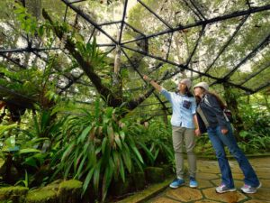 a kinabalu park tour ticket lets you see the kinabalu park and poring hot spring