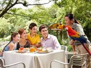 with a lunch with the parrots ticket at the jurong bird park singapore, you'll enjoy your food while being entertained by the smart macaws