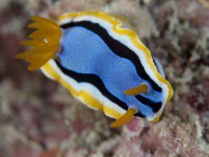 mantanani snorkeling tour plus the kawa kawa wetland may let you see marine lives such as this