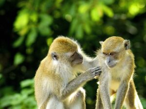 monkey forest in bali island indonesia