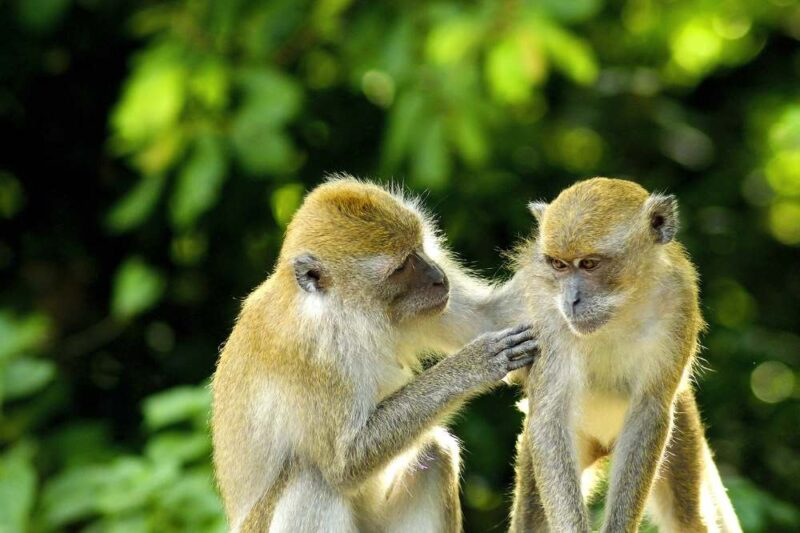 monkey forest in bali island indonesia