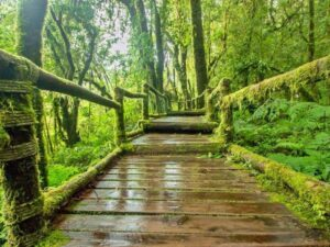 some of the wooden platform you would walk on during your mossy forest tour in the cameron highlands