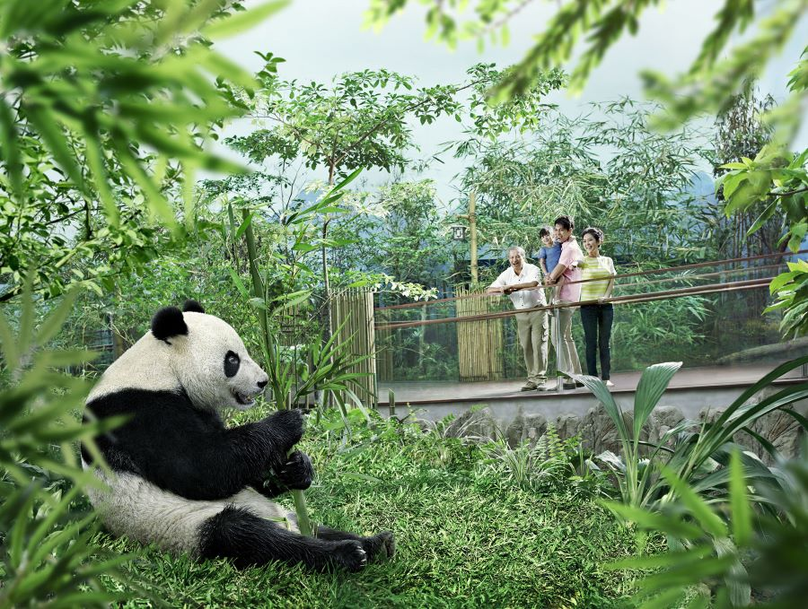with the singapore river safari ticket you also gets the access to see singapore's only panda pair