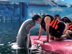 you can be close to the dolphins with your dolphin world pattaya ticket