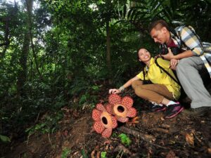 royal belum national park tour in perak is a great way to explore nature and see flora and fauna like the rafflesia flower like this