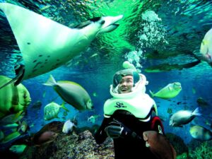 sea aquarium singapore ticket lets you see underwater world in singapore