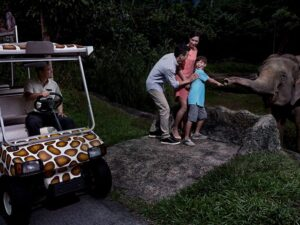 the singapore night safari is best visited with family