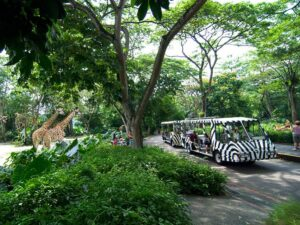 with the singapore zoo tickets you get to see a huge number of wild life in a wild class southeast asian zoo