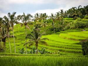 the famous jatiluwih rice plantation in bali that you can see during this bali tour