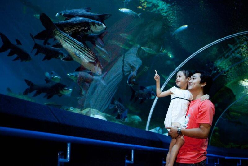 with the underwater world pattaya ticket you may enter this oceanarium with your family
