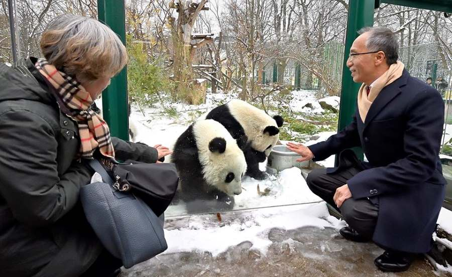 The arrival of the giant panda was a major event for Austria. It is said that half of the population came to visit the animals while the post office brought out special panda stamps in the animals honor.