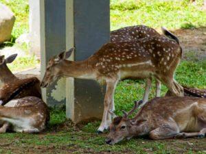 deer park kl