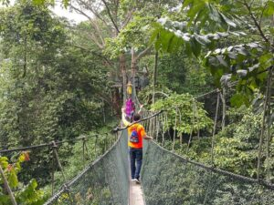 frim canopy walk kuala lumpur