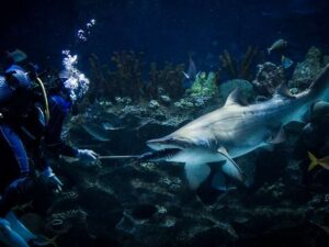 aquaria klcc shark feeding