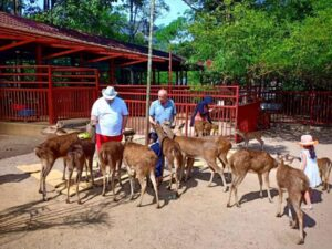 feeding deers in langkawi's wildlife park