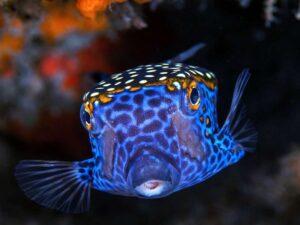 florescent blue fish in the bangkok sea life ocean world