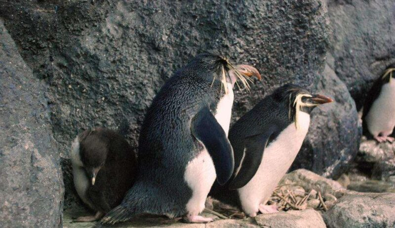 rock penguins in the underwater world langkawi island