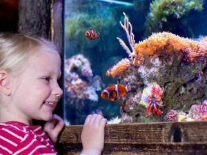 up close with aquarium at sea life malaysia with a discount ticket