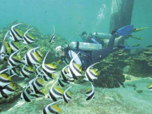 payar island langkawi scuba diving trip